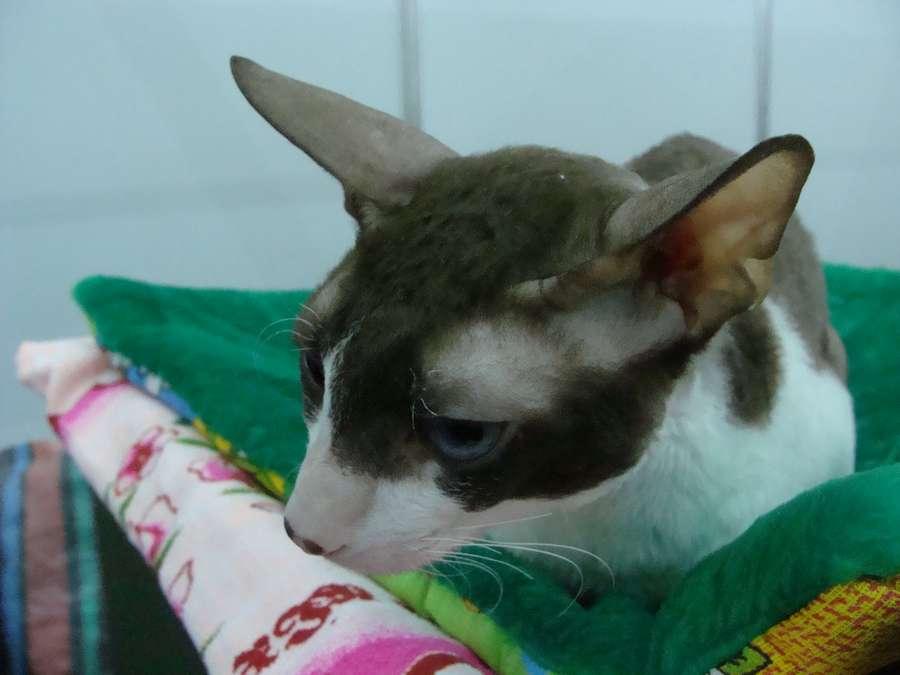 На Пермскую ярмарку совершено нашествие кошек - фото 1