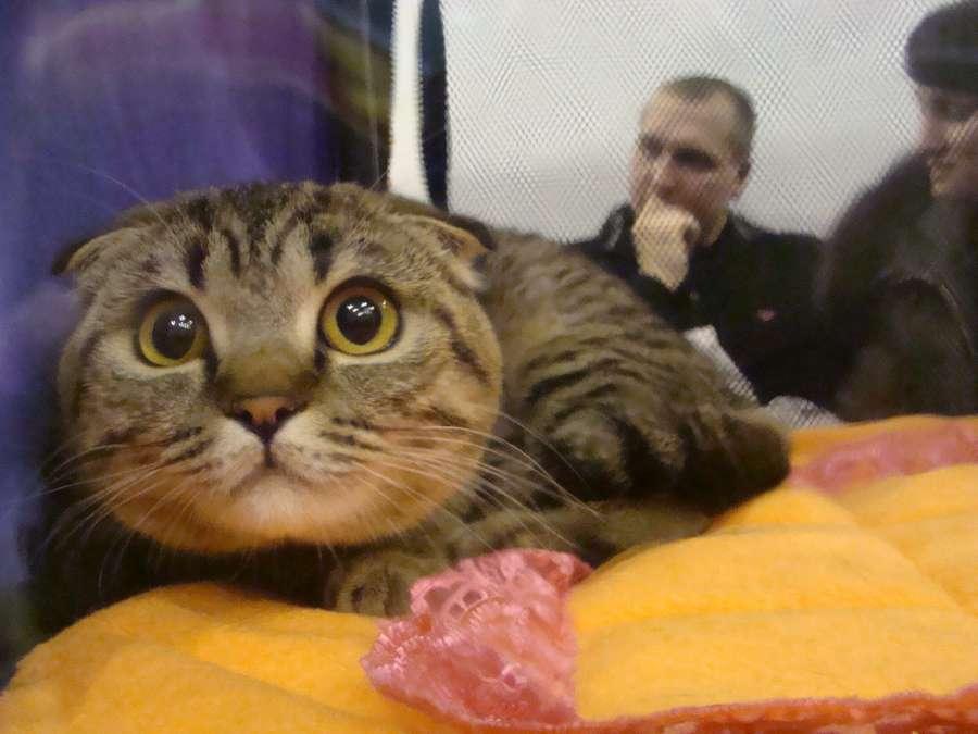 В Пермской ярмарке прошла выставка собак и кошек - фото 1