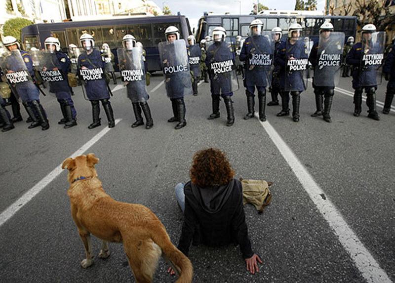 Горячая греческая собака борется за справедливость - фото 1