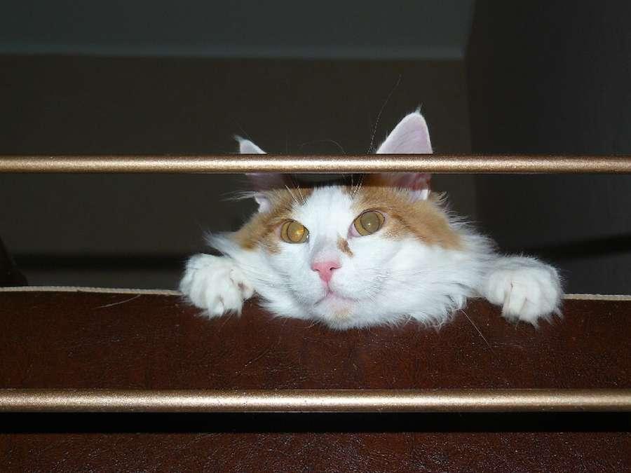 В Перми живет турбированный кот