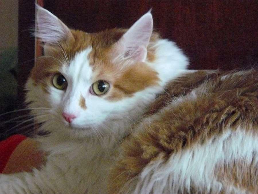 В Перми живет турбированный кот - фото 2
