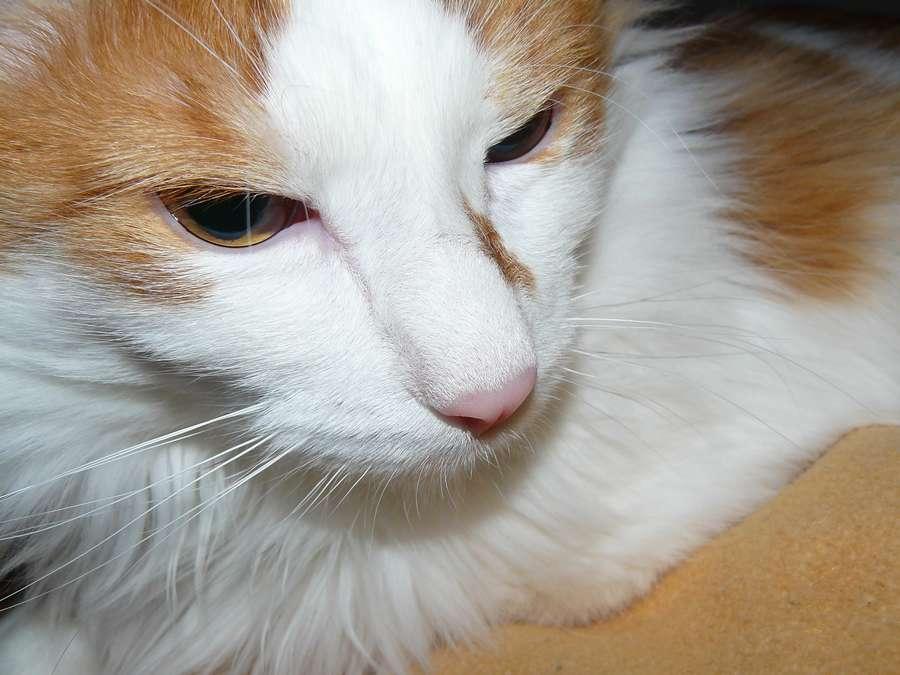В Перми живет турбированный кот - фото 3