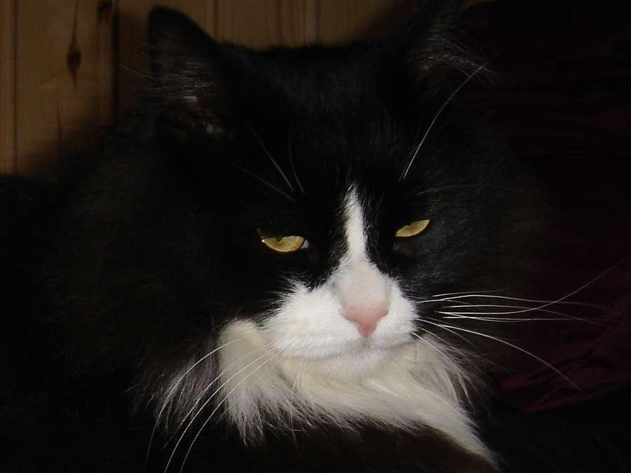 В Перми кот охотится из форточки
