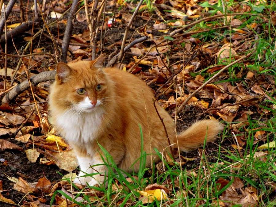 17 мгновений осени - история про пермского кота-Штирлица