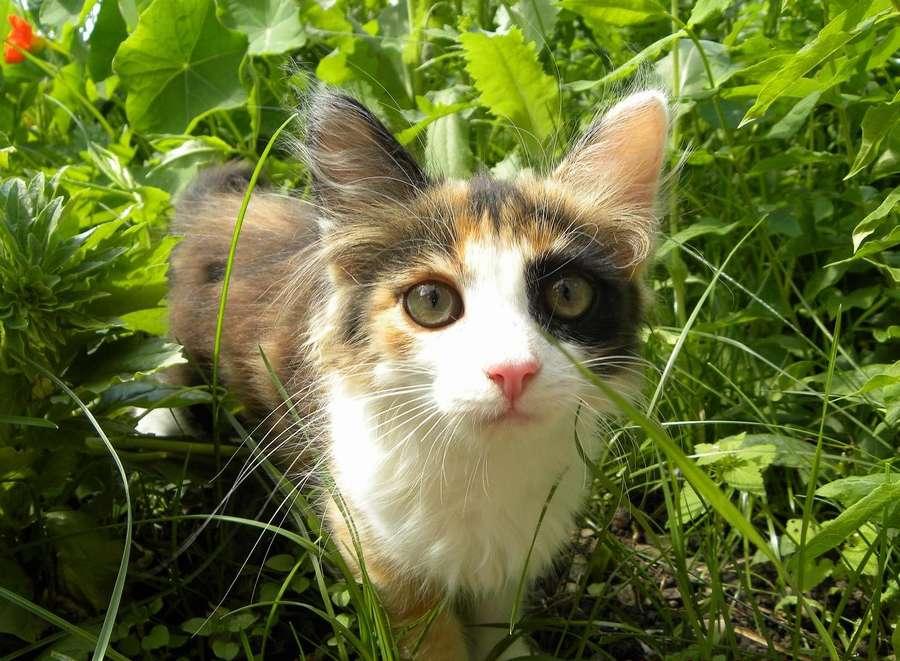 Кошка протестировала пермячку на стрессоустойчивость