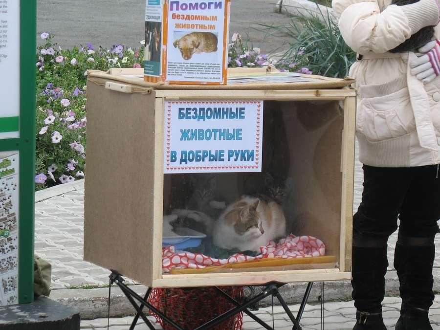 В Перми хотят построить «Жучкин дом»