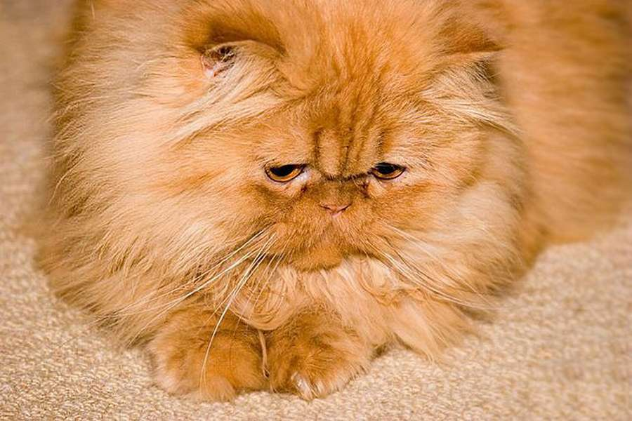 В Перми живет кот-футболист - фото 1
