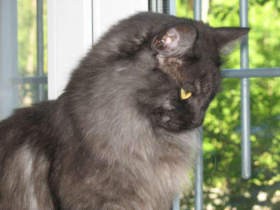 В Перми живет кот с собачьим характером