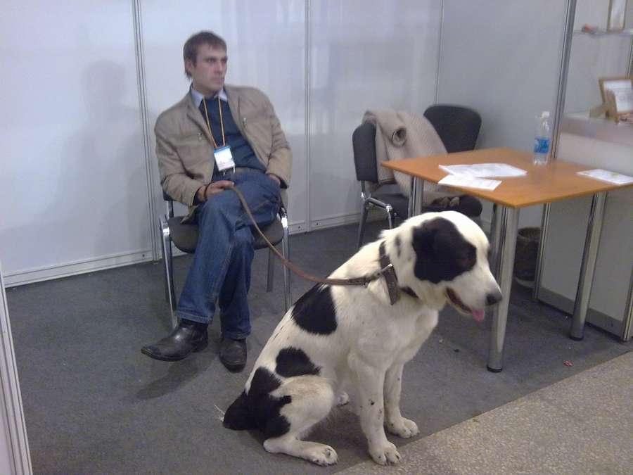 Пермскую ярмарку оккупировали собаки - фото 1