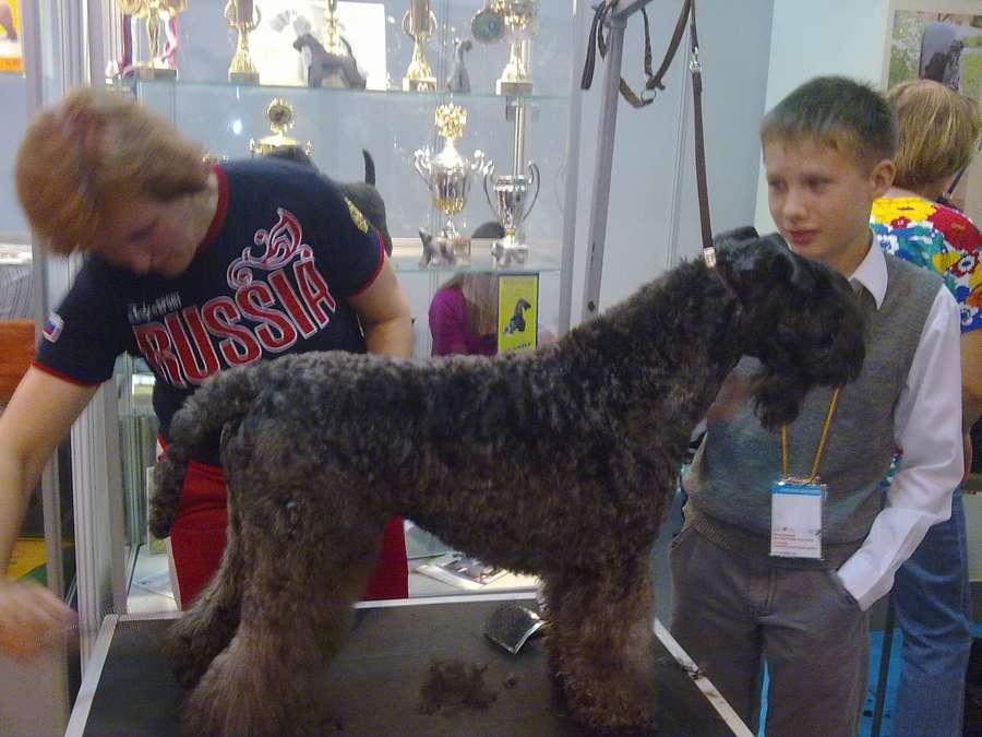 Пермскую ярмарку оккупировали собаки - фото 2