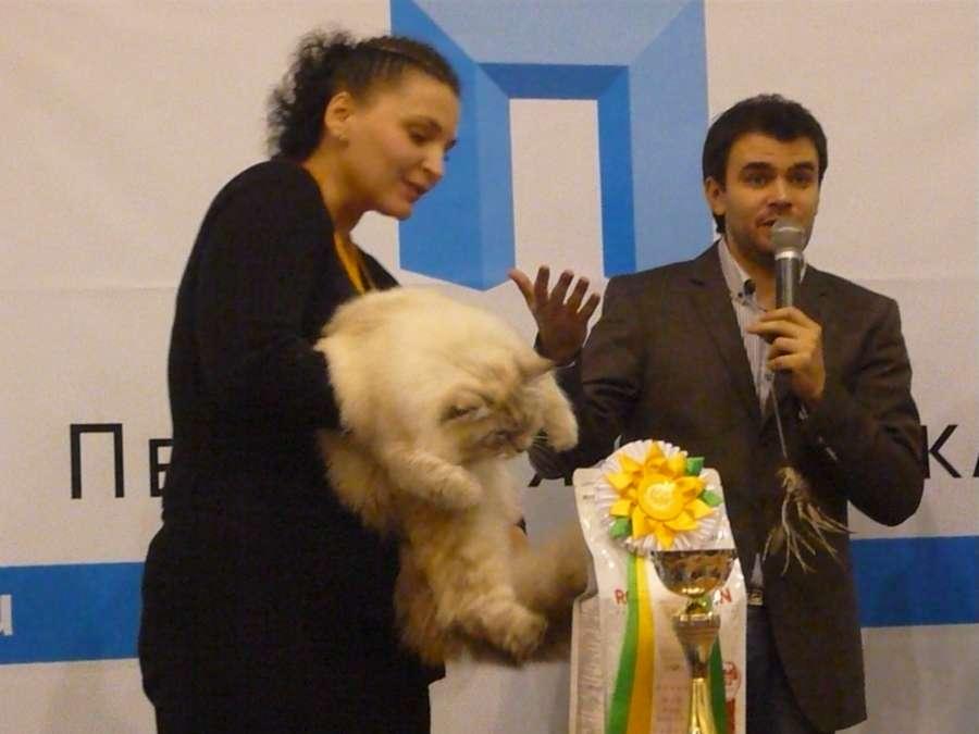 На кошачьей выставке в Перми победителем стал Геркулес