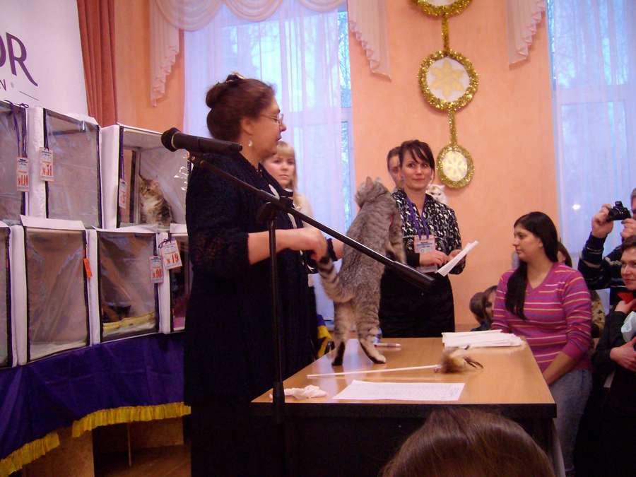 В Перми завершилась международная выставка кошек