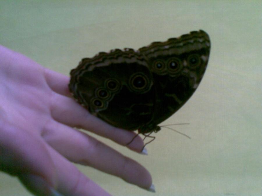 Жители Березников любуются бабочками
