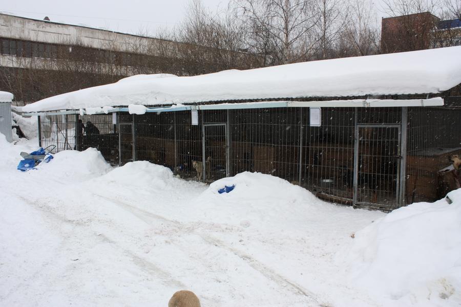 Собачья жизнь обитателей пермского собачьего приюта - фото 1