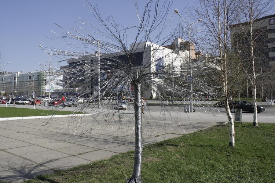 В Перми появилось проблемное дерево
