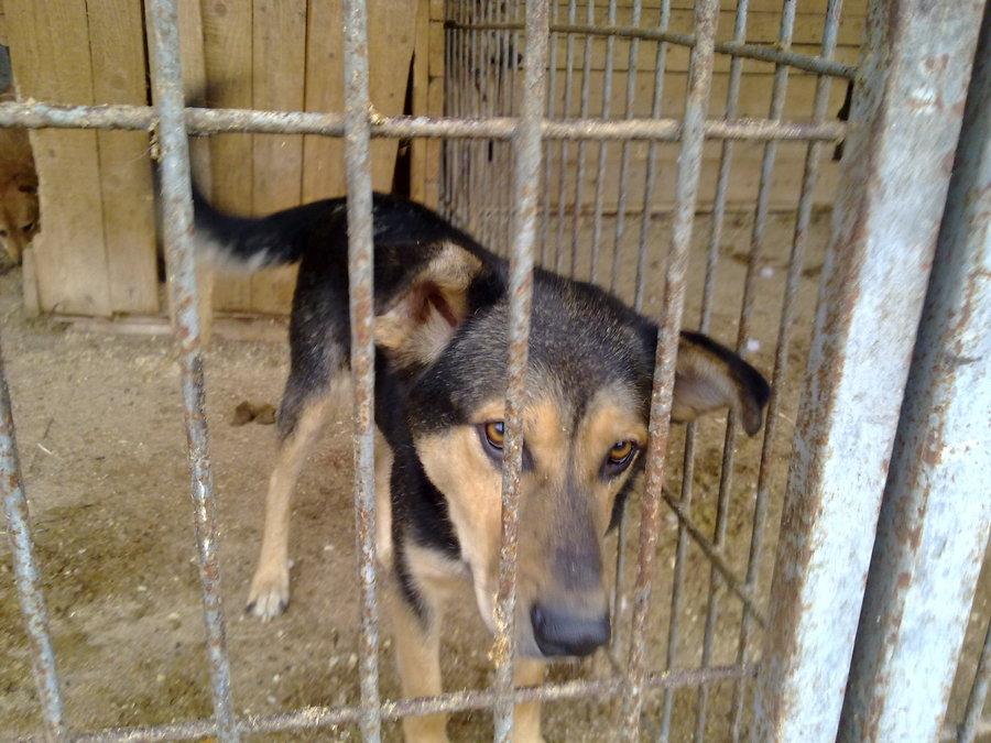 В Перми приют для собак провел День открытых дверей