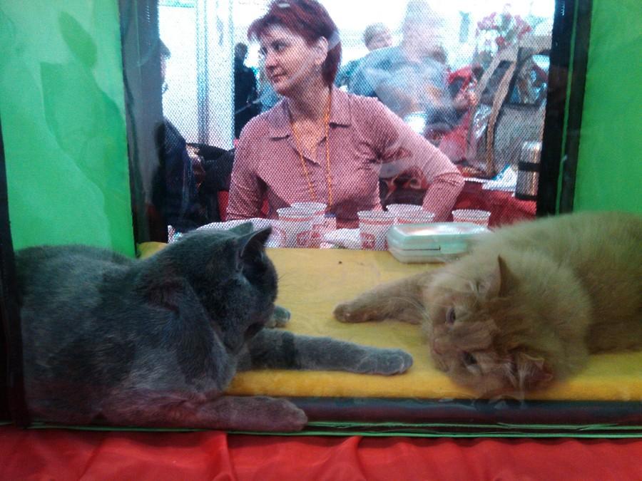 Пермякам показали кошку длиной 1 м 10 см - фото 1