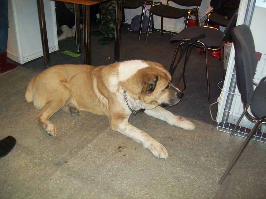 На Пермской ярмарке сегодня лаяли 1200 собак