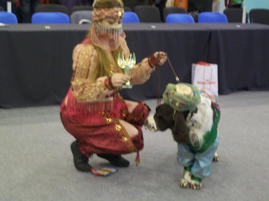 В Перми показали танцующих собачек