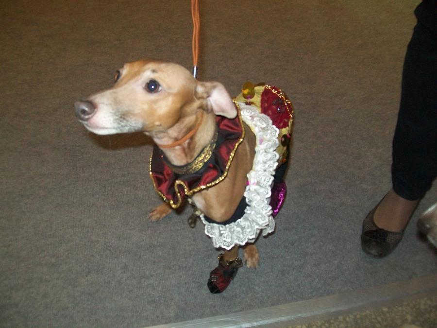 В Перми показали танцующих собачек - фото 2