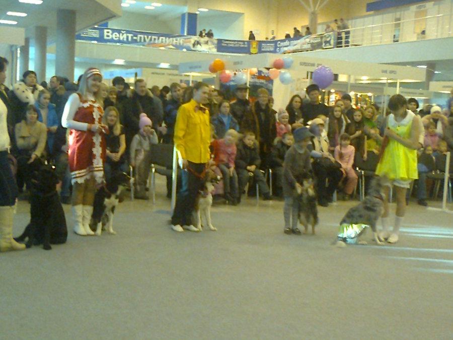 В Перми показали танцующих собачек - фото 4
