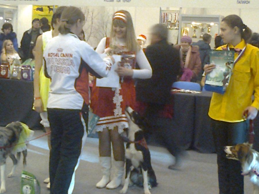 В Перми показали танцующих собачек - фото 6