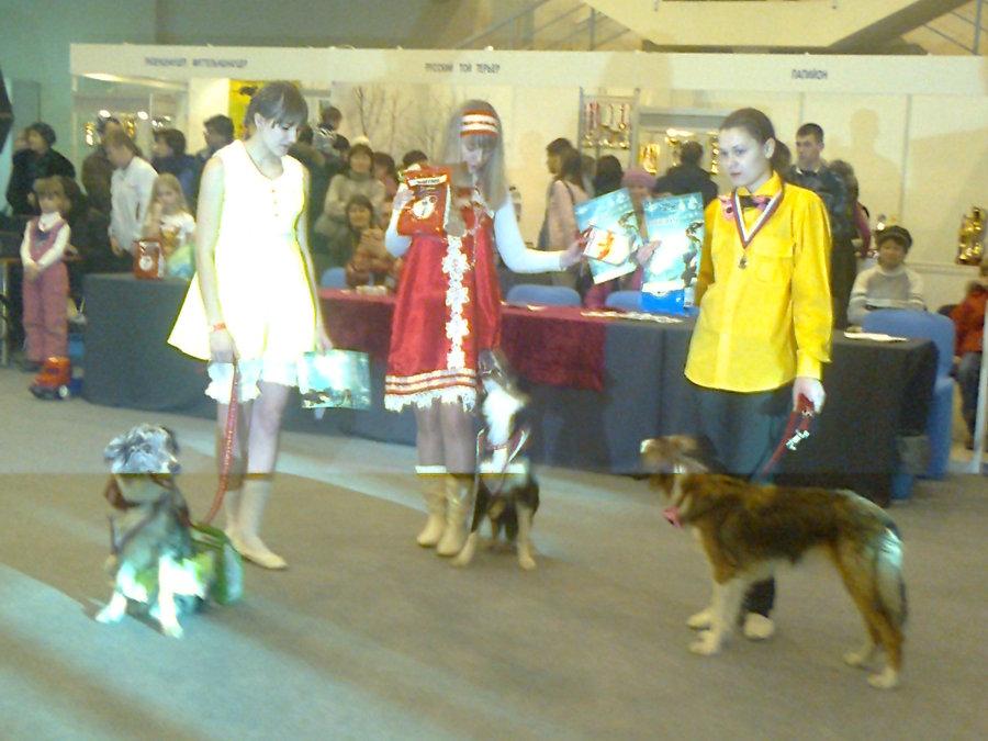 В Перми показали танцующих собачек - фото 7