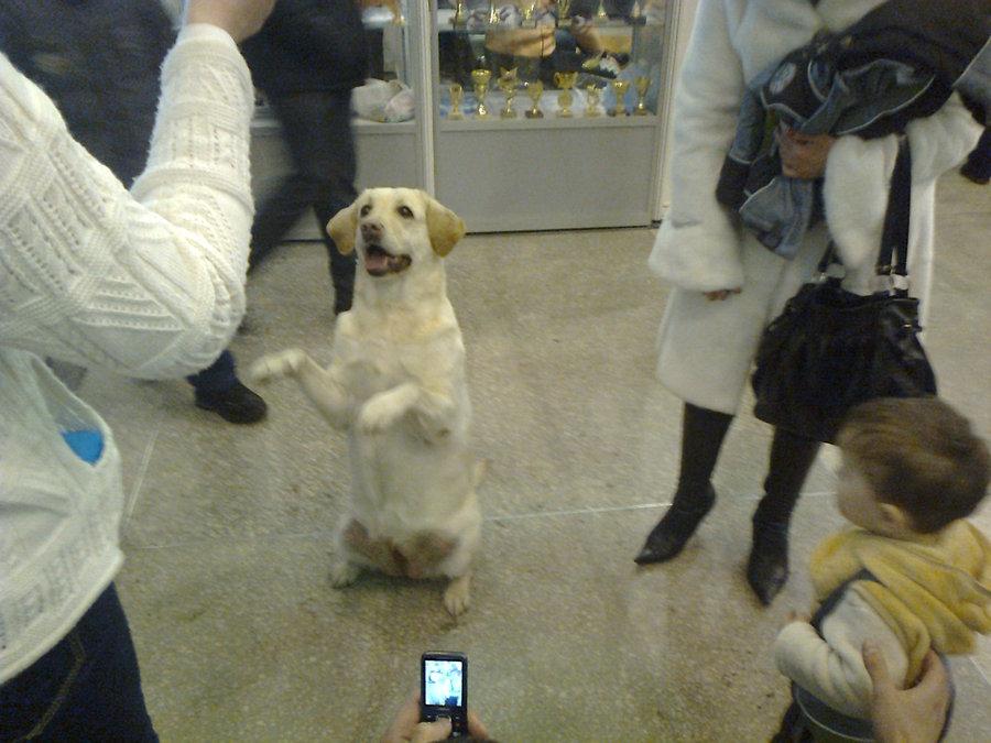 В Перми показали танцующих собачек - фото 8