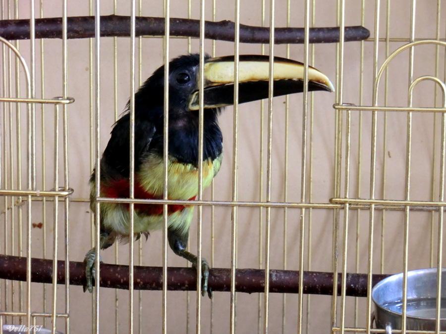 В Пермском зоопарке появились птицы с огромным клювом