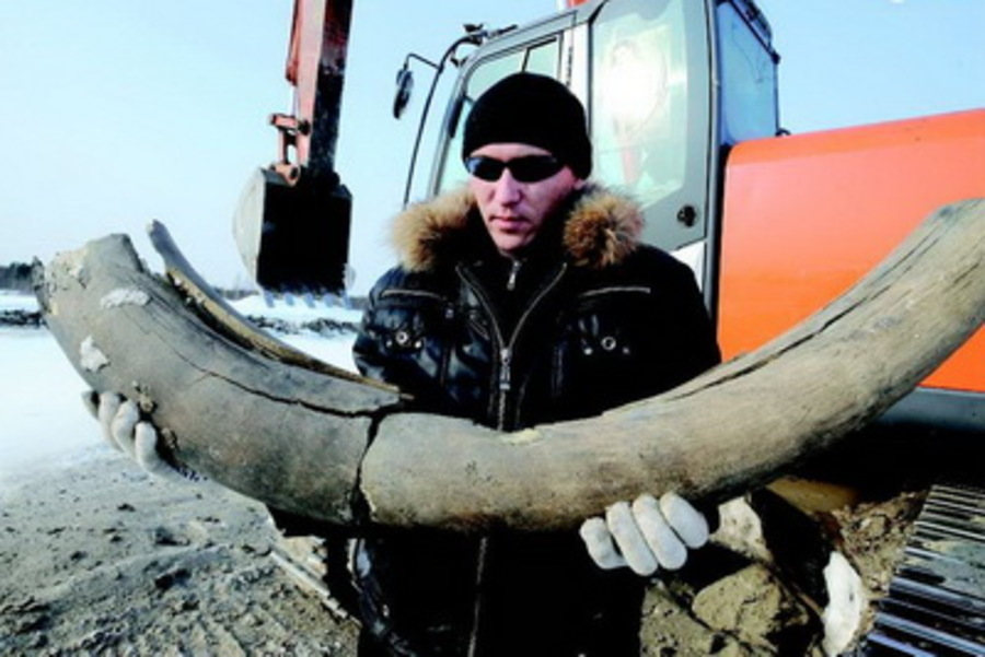 В Ухте экскаваторщик откопалбивень мамонта - фото 1