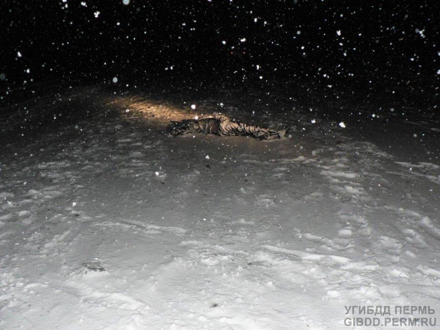 В Кудымкарском районе на дороге найдено тело неизвестного пешехода - фото 1