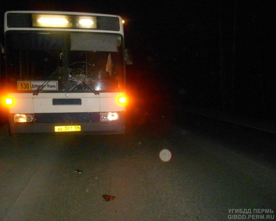 В Перми автобус сбил пешехода - фото 1