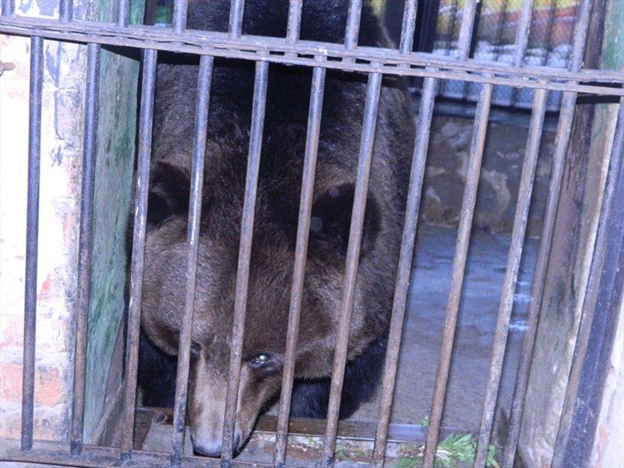Пермяки находились в метре от медведя