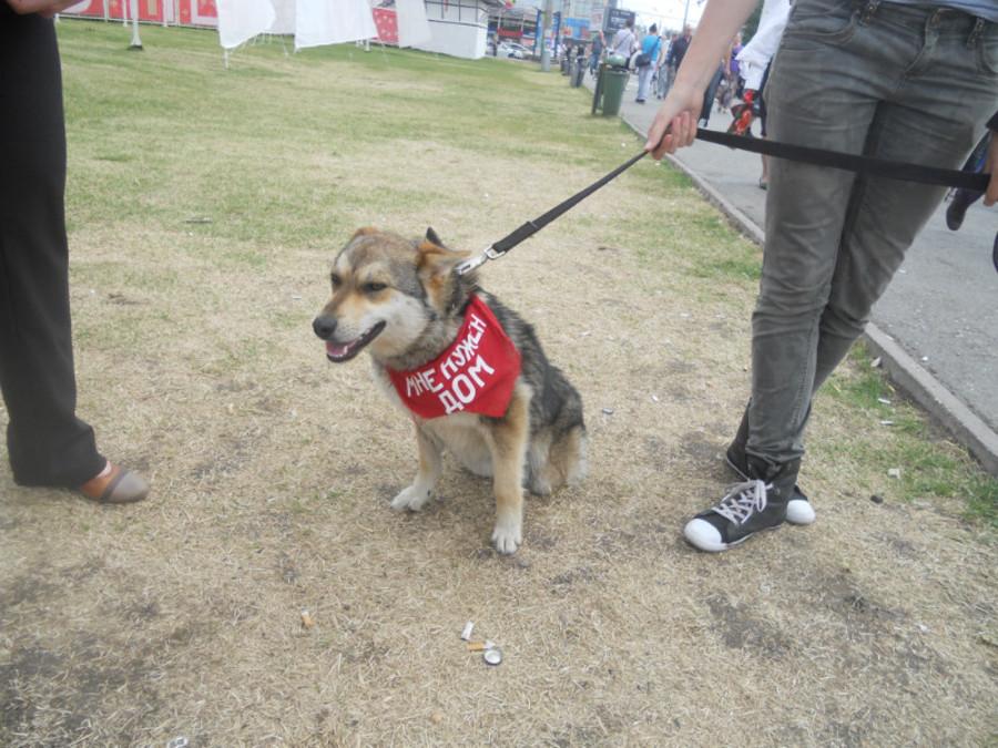 В Перми собаки искали дом - фото 3
