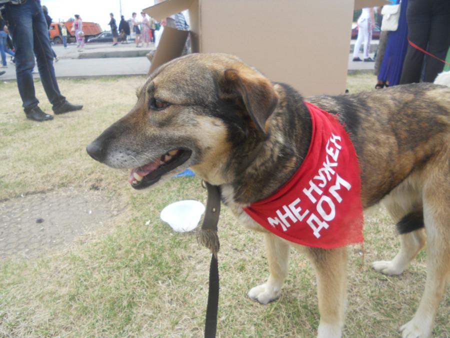 В Перми собаки искали дом - фото 4