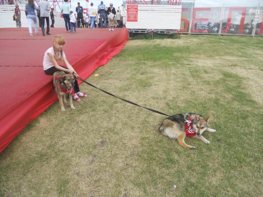 В Перми собаки искали дом - фото 6