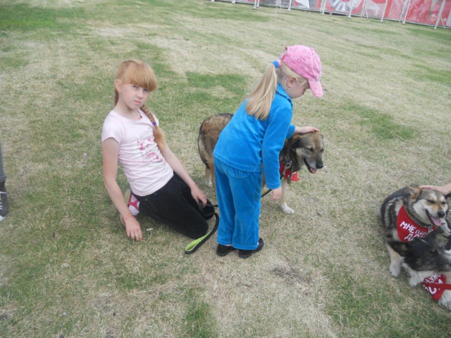 В Перми собаки искали дом - фото 9