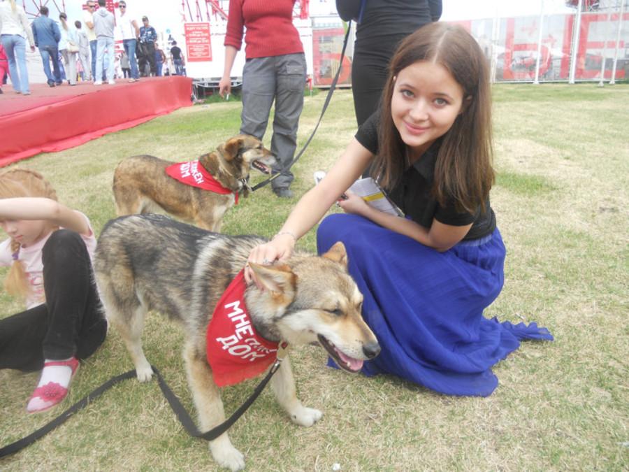 В Перми собаки искали дом - фото 19