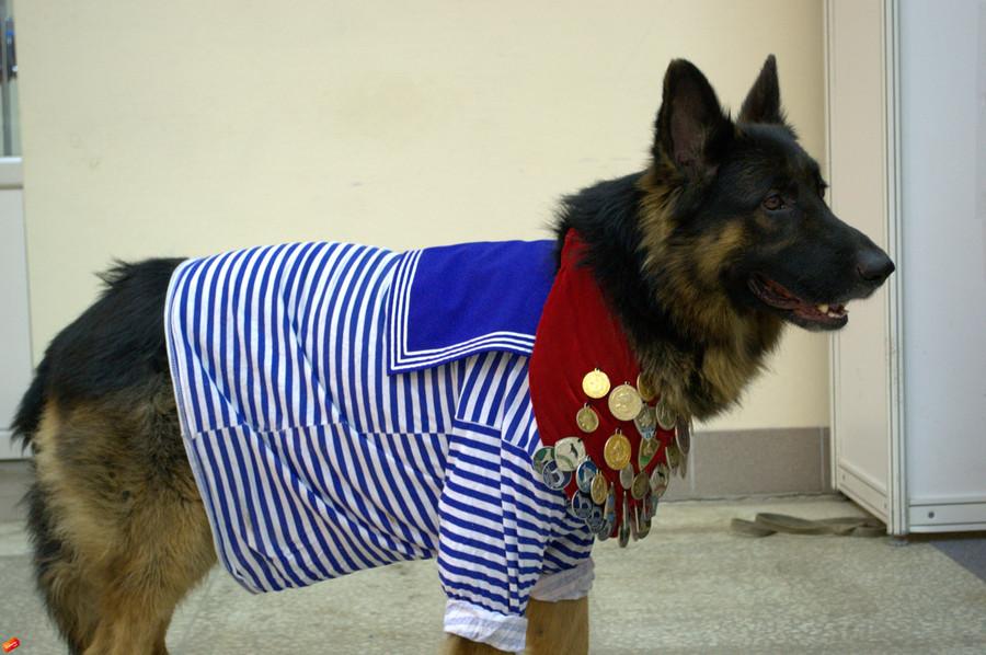 В Перми проходит «собачья олимпиада»