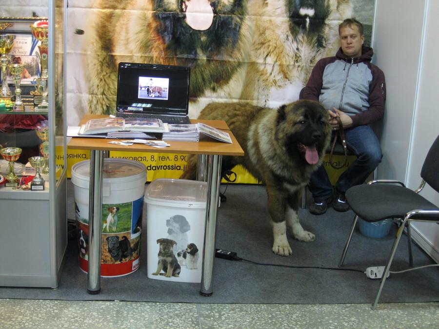 Сегодня на Пермской ярмарке прошло собачье дефиле