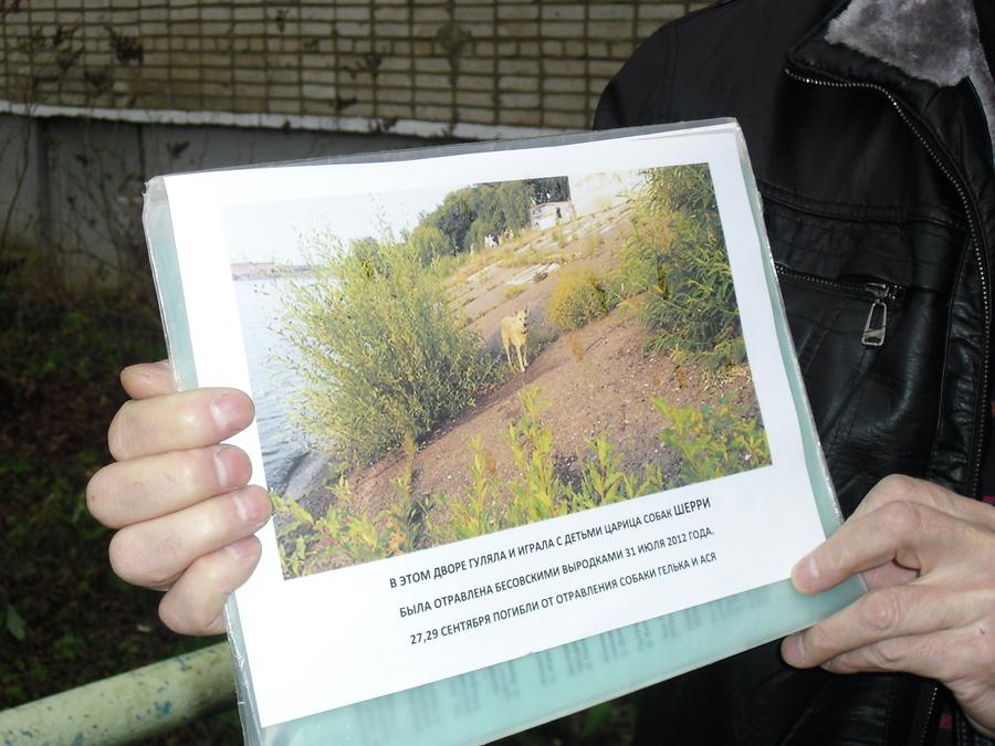 В Перми защитники животных начали действовать против отравителей собак