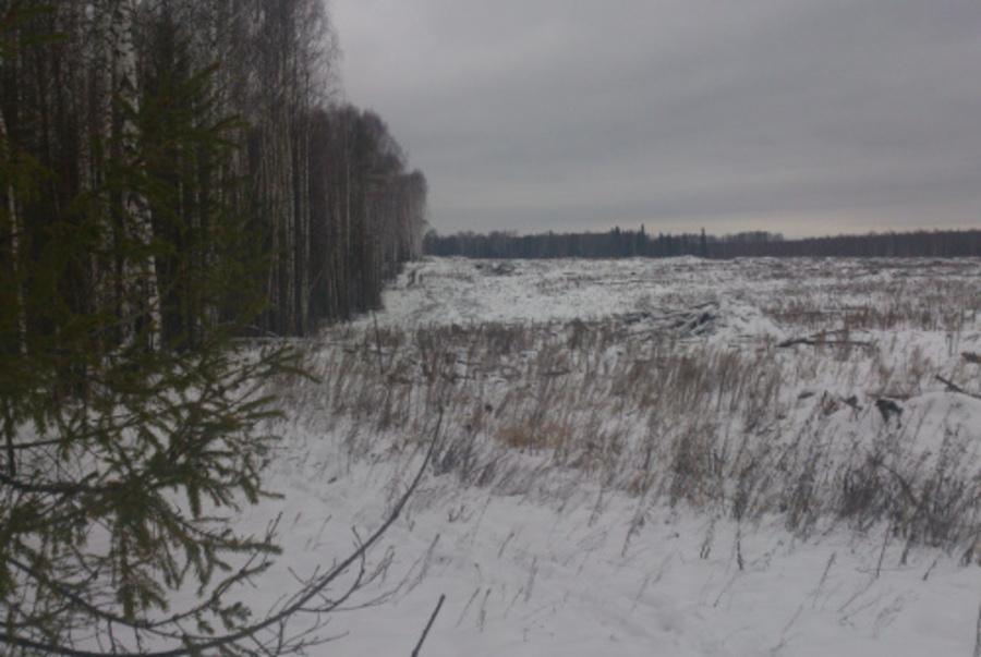 В Пермском крае незаконную лесосеку увидели из космоса - фото 1