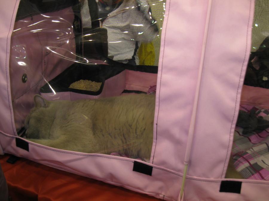 На выставке «Кошкин дом» коты уснули