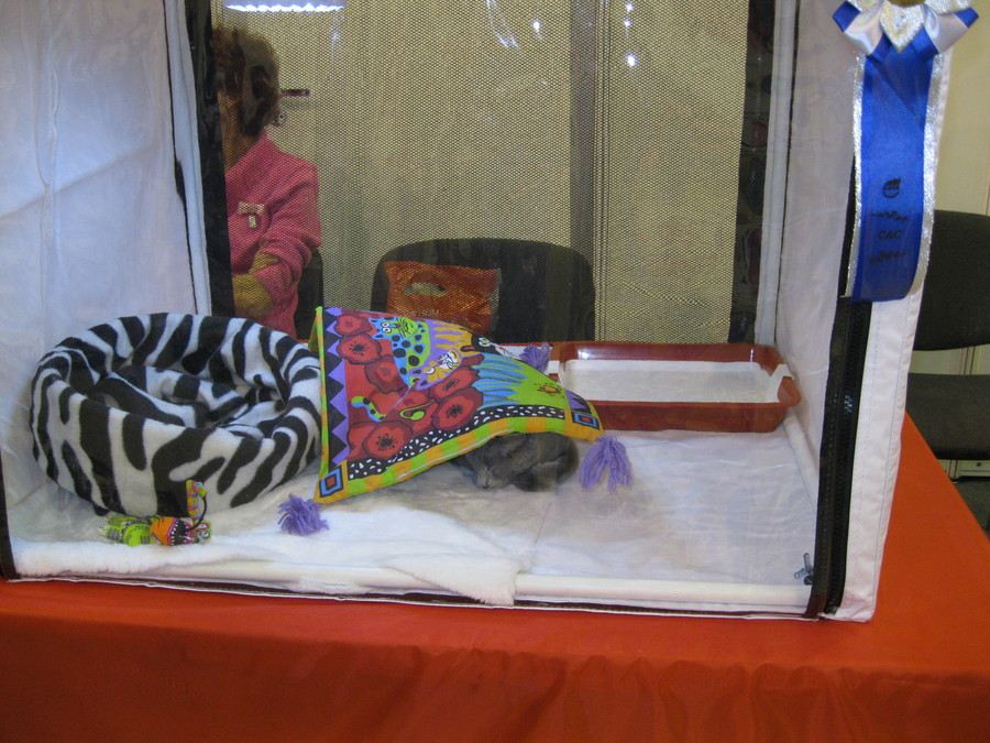 На выставке «Кошкин дом» коты уснули - фото 4