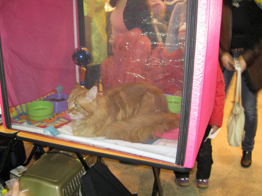 На выставке «Кошкин дом» коты уснули - фото 5