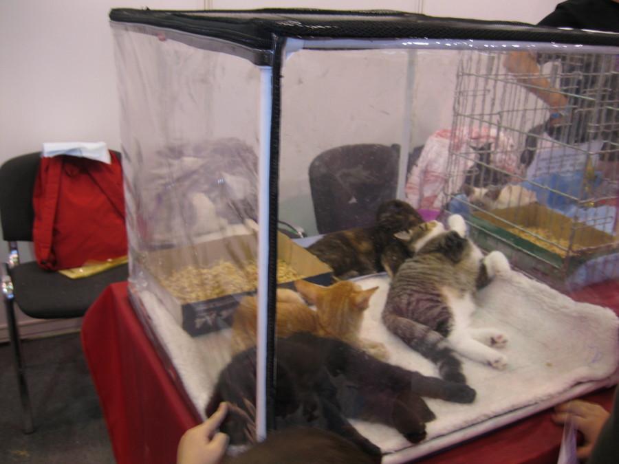 На выставке «Кошкин дом» коты уснули - фото 10