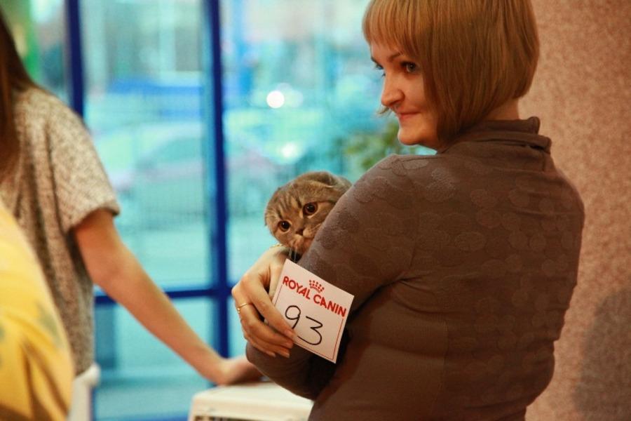 Добро победило зло на выставке кошек в Перми - фото 1