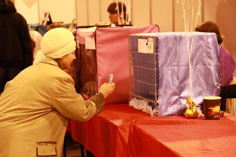 Добро победило зло на выставке кошек в Перми - фото 4