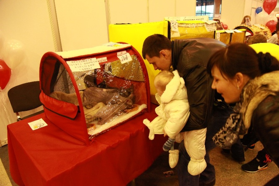 Добро победило зло на выставке кошек в Перми - фото 5
