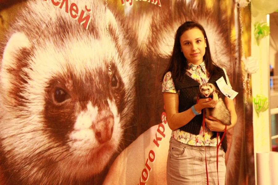 Добро победило зло на выставке кошек в Перми - фото 7